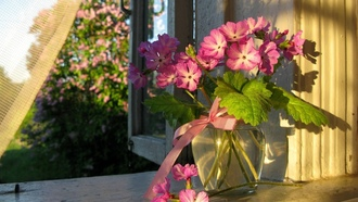 Ваза занавеска цветы окно лето