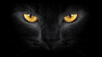 ������ �����, ������ �����, Black cat , yellow eyes, wild , �����