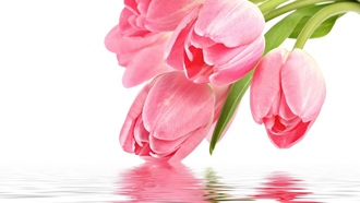 pink, reflection, Flowers, �����, �������, pink tulips, tulip, for you, with love