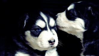 �����, �����, ������, Cute, puppies