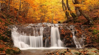 �����, Autumn waterfall, picture, nature, coloured wood, woodland scenery, ���������