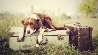 �����, ������, waiting, ��������, nature, dogs, �����, plants, luggages, grass, �������, ��������