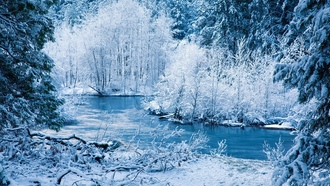 �����, rivers, bushes, ����, winter, branches, ���, ����, ����, snow, ice, �����