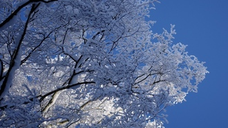 snow, ����, �����, ����, blue, ice, branches, �����, ����, frost, �������, skies, ����, ����, winter, trees