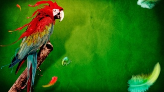 �����, ����, ��������, ������� ���, feathers, green background, birds, ��������, parrots, animals