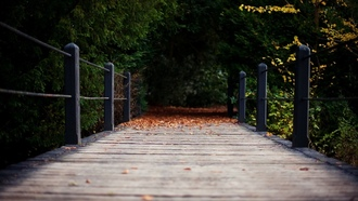 wooden, ����������, leaves, �������, Wooden Bridge, path, ���������� ����, ������, ����, trees