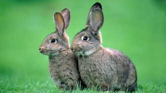 bunnies, animals, �������, ��������