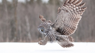 ����, �����, animals, owls, ��������, winter