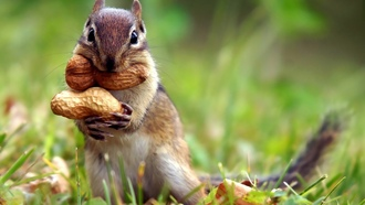 �����, �����, peanuts, grass, ������, squirrels