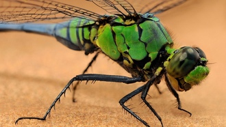 �������, ���������, macro, insects, dragonflies, �����