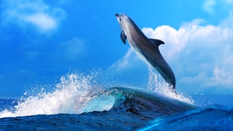 dolphins, ������� �����, ��������, animals, ���������, sealife