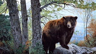 bear, бурый медведь, charles frace, Morning watch, forest, nature, painting