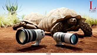 �������, lens, nature, �����, ��������, close-up, ����������, high-res, Canon, turtles, flowers, EOS, �����, ������������ ���������, landscapes, ������� ������, artwork, photograph, �������� ����������, ��������, �������, animals
