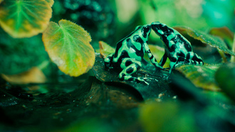 slimy affection, ���������, academy of science, ������