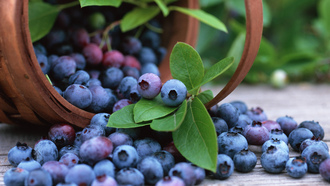 blueberry, �������, fruits, �������