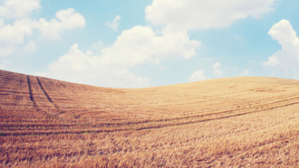 sky, spikes, �������, landscape, wheat, ������, clouds, field, �������, ������, �������, ����, nature, ����, 2560x1600