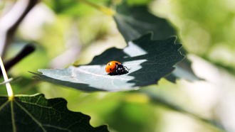 �����, sun, 2560x1600, light, ����, ������, greenery, ����� �������, macro, ������, ������, leaf, ladybug