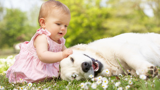child, grass, joy, mode, flowers, dog, baby, play, little beautiful girl, happy, childhood