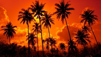 landscape, coconut palms , nature, sand beach, clouds, sunset. thailand , sky, beautiful,