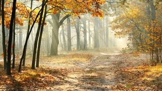 forest , leaves, landscape, morning, misty, road, nature, sun rays, beautiful, autumn trees