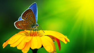 yellow flower, �������, macro, water drops, �������, butterfly, beautiful, nature