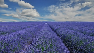 france, ������, �������, provence, �������, �������, ����