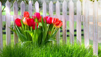 nature, �����, ��������, grass, fence, �����, spring, �����, �����