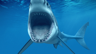 ����� �����, ��� ���������� (carcharodon carcharias, great white shark)