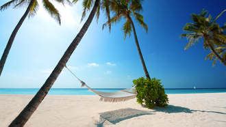 palm trees, boat, green plant, beaches, white sand, hammock