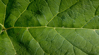 leaf, pattern, green, large