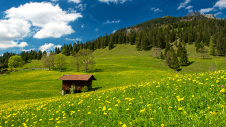 trees, sky, clouds, grass, green field, germany, landscape, pasture in the bavarian alps, nature
