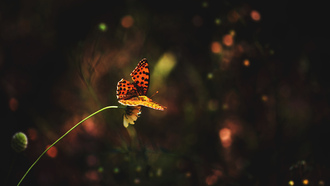 flower, �������, ������, butterfly, grass, �����
