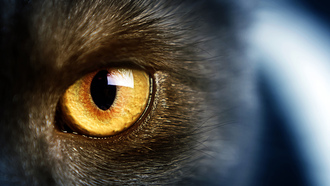 wild, �����, ������ �����, yellow eye, �����, cat