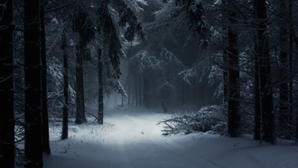 photography, landscape, nature, winter, forest, snow, mist