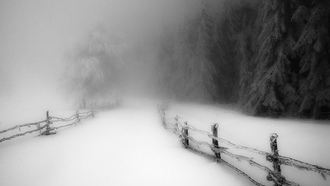 landscape, nature, winter, morning, snow, forest, fence, cold, monochrome, road, path