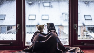 cat, window, blanket, winter, snow