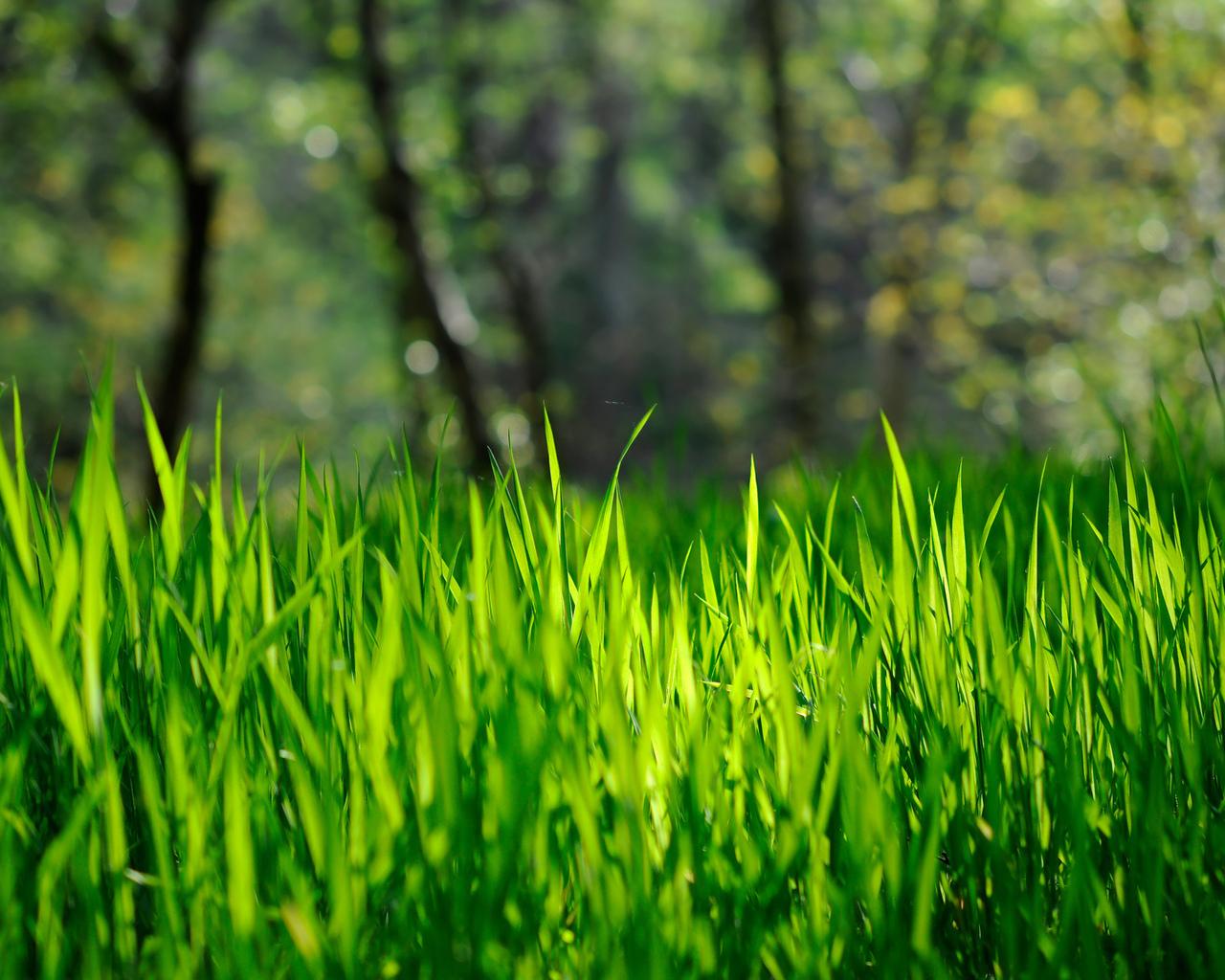 Трава обои для рабочего стола 1280 x 1024