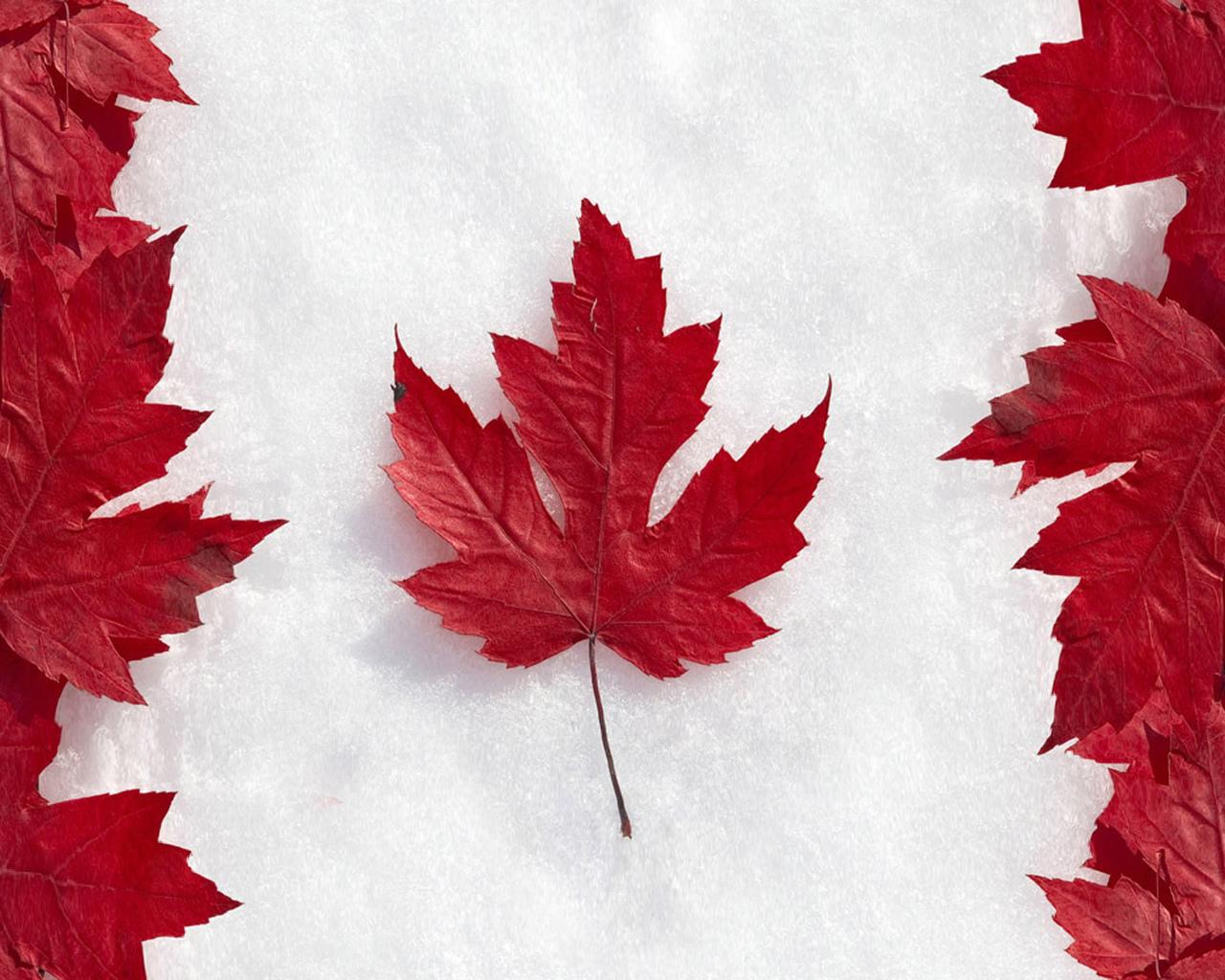 Клен снег канада листья флаг обои