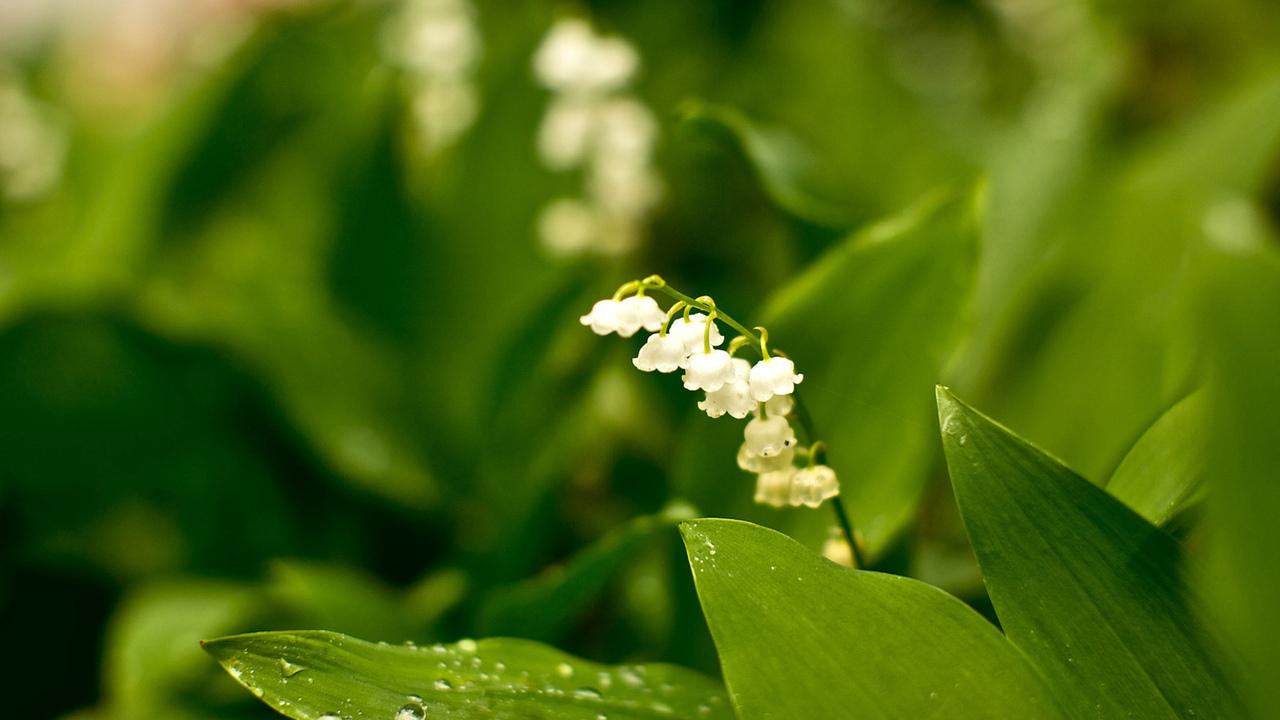 зелёный, природа, скромность, белый, Цветы, лес, растения, парк, сад, фото, красота