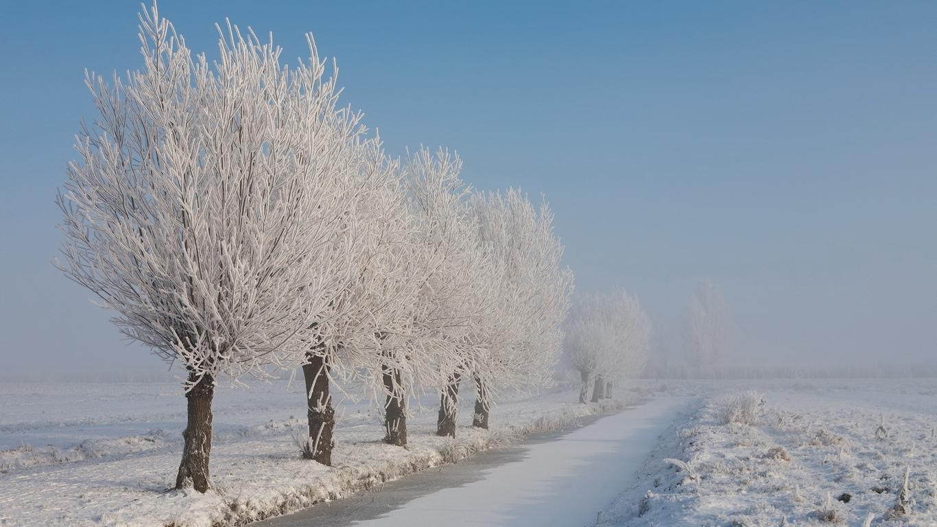 Природа иней зима деревья пейзаж