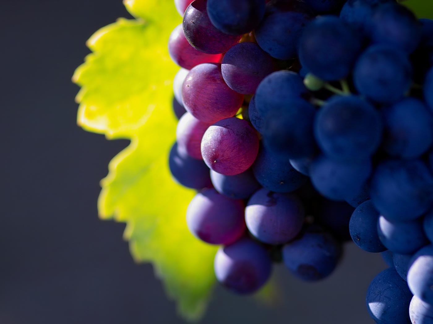 macro photo, grape, фото, фрукты, виноград, nature wallpapers, Макро обои, fruit, природа, большое разрешение