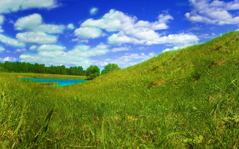 трава, бабочка, панорама, лето, Река, птицы, небо