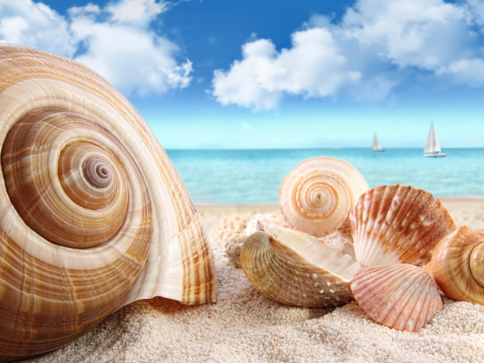 Море пляж песок ракушки обои для