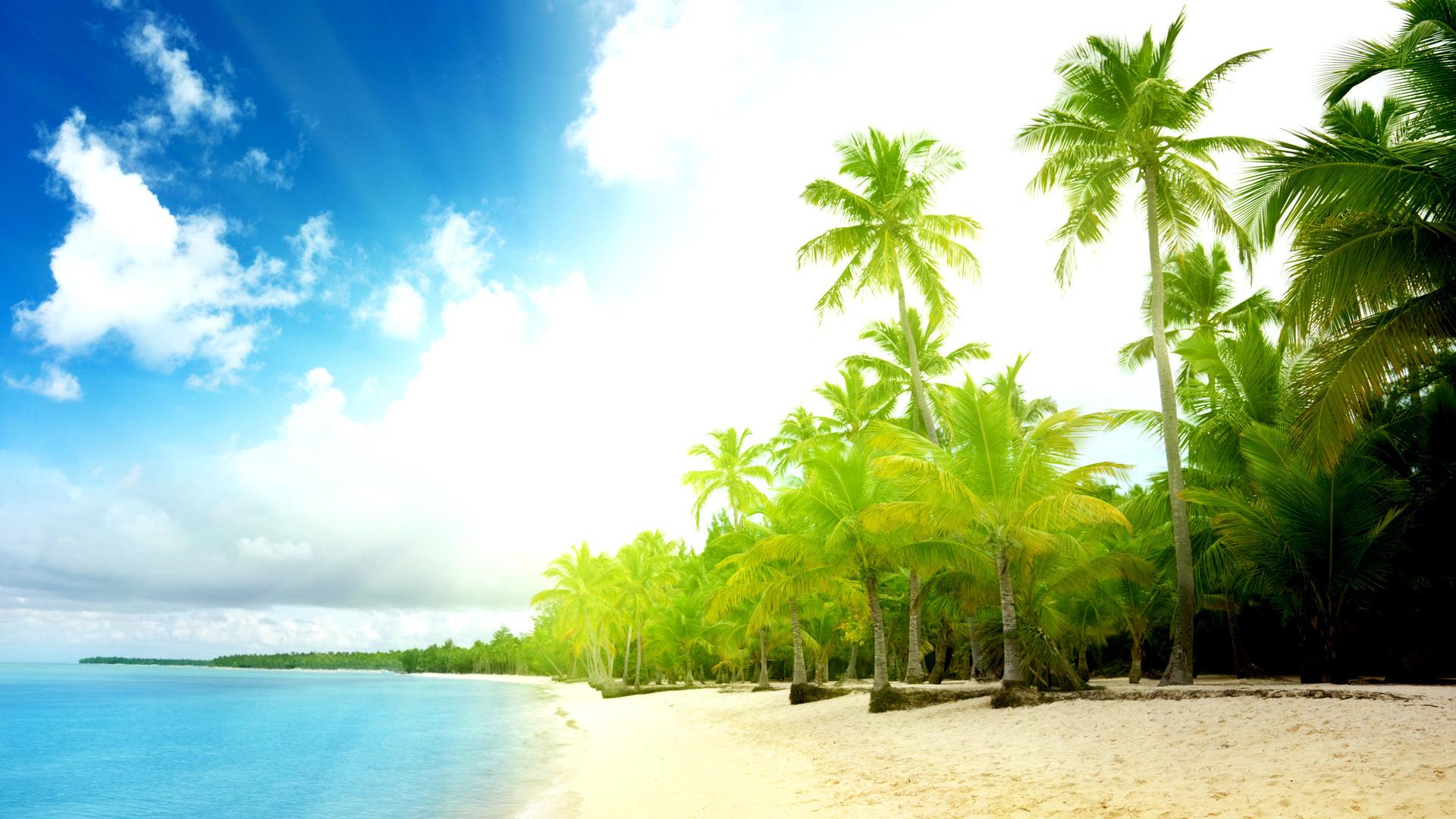 пальмы на рабочий стол