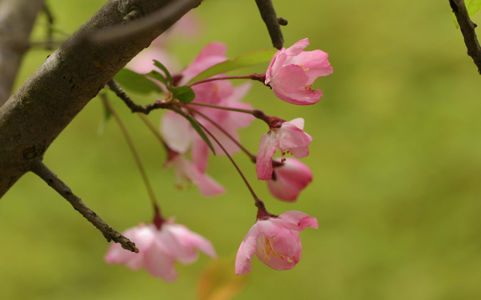 Розовые природа цветы зелень