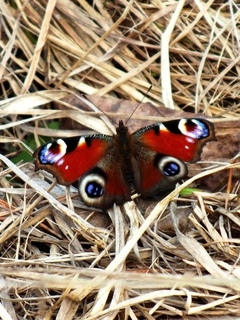 Красота весна бабочки природа обои