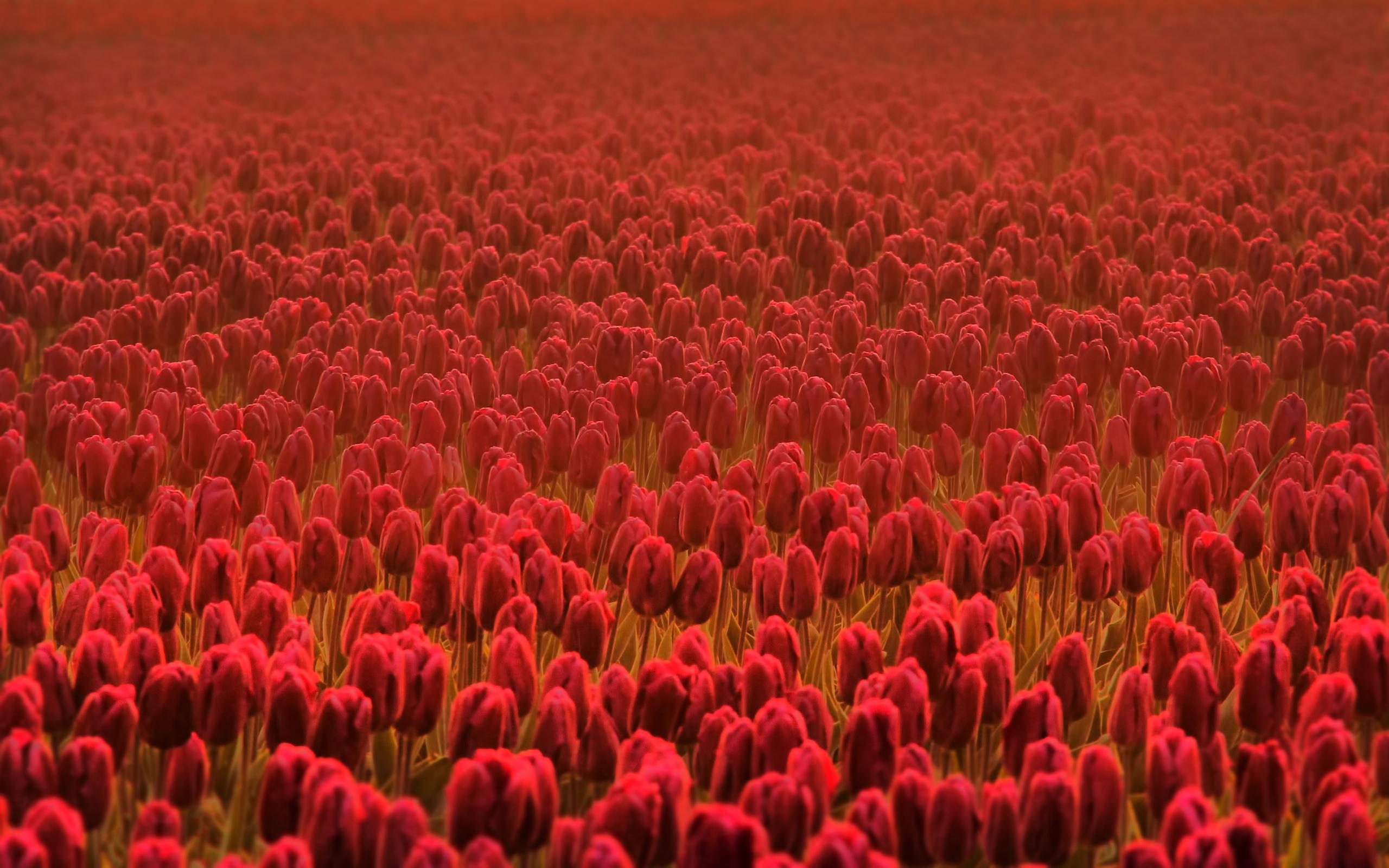 Весенние цветы свежесть летние цветы