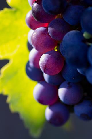macro photo, grape, ����, ������, ��������, nature wallpapers, ����� ����, fruit, �������, ������� ����������