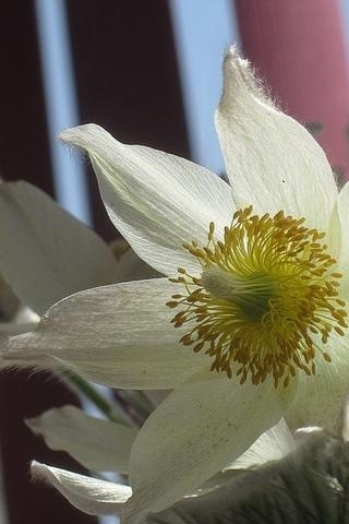 Цветы весенние нежные обои для