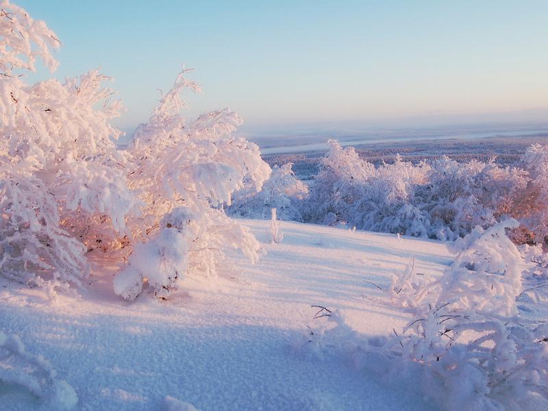 Деревья небо горизонт зима снег